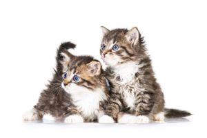 Unterschätzte Gefahr: Fenstersturz bei Katzen